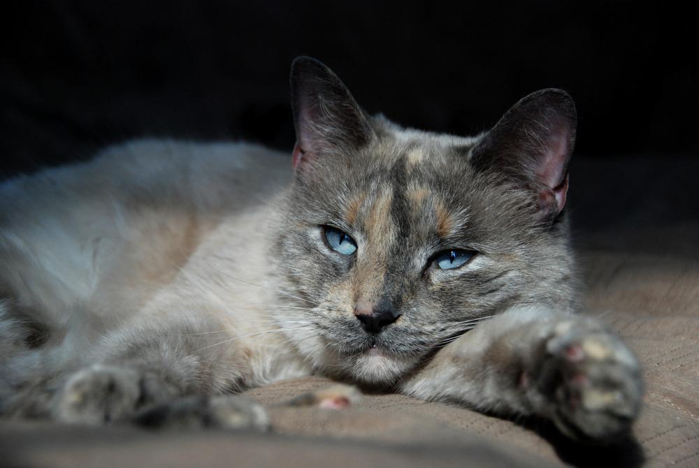 male cat fixed cost