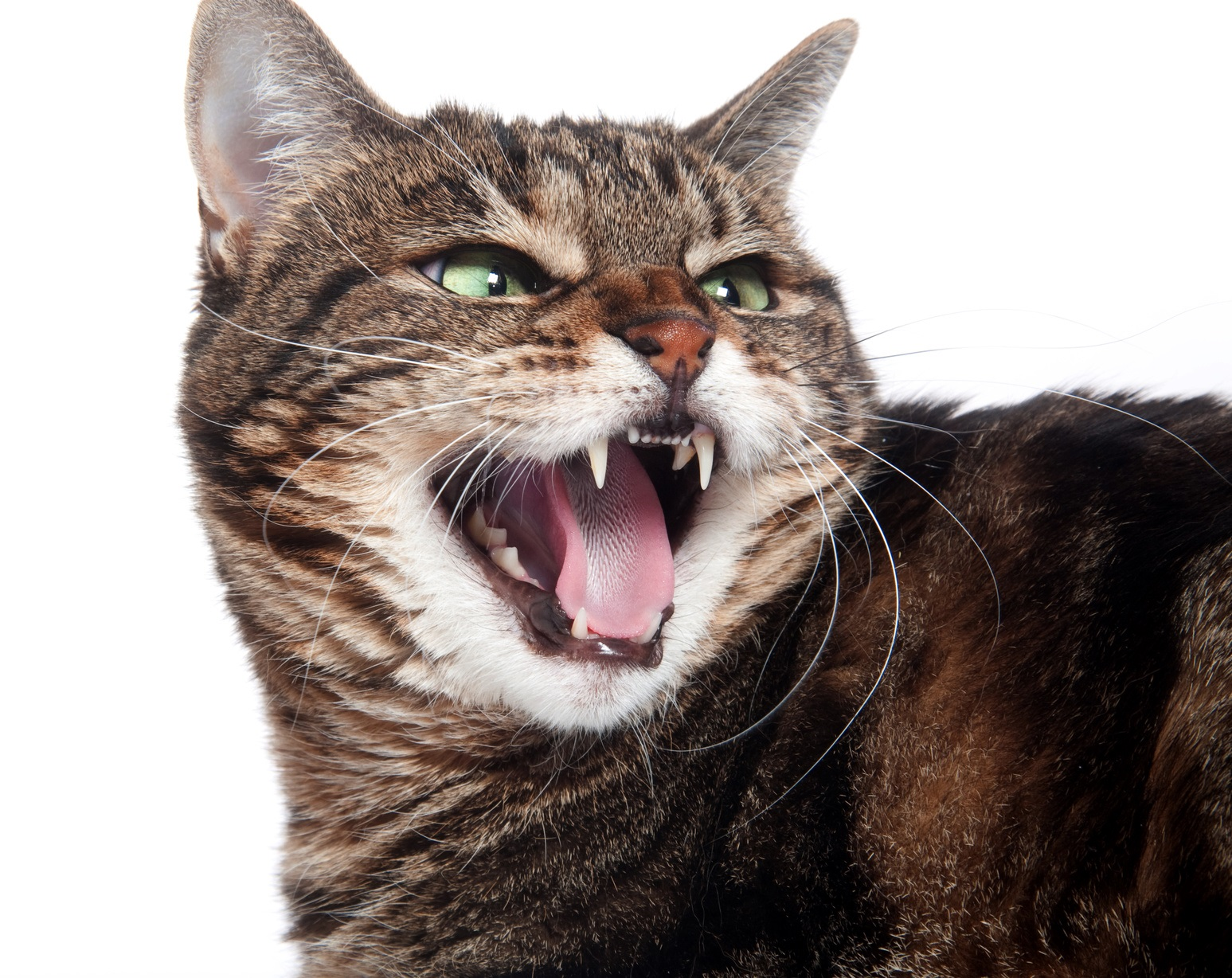 Rabies in a cat. Prevention and treatment 29