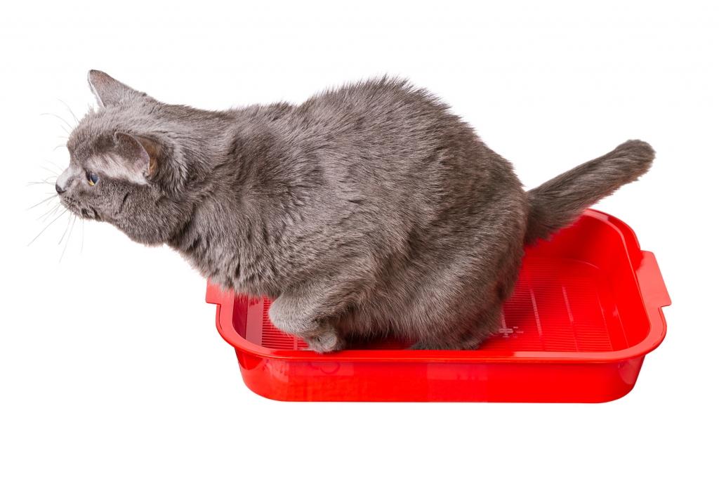large cat litter box walmart