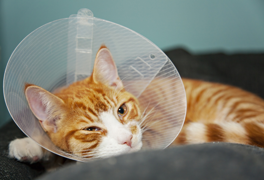How to care for a cat after neutering