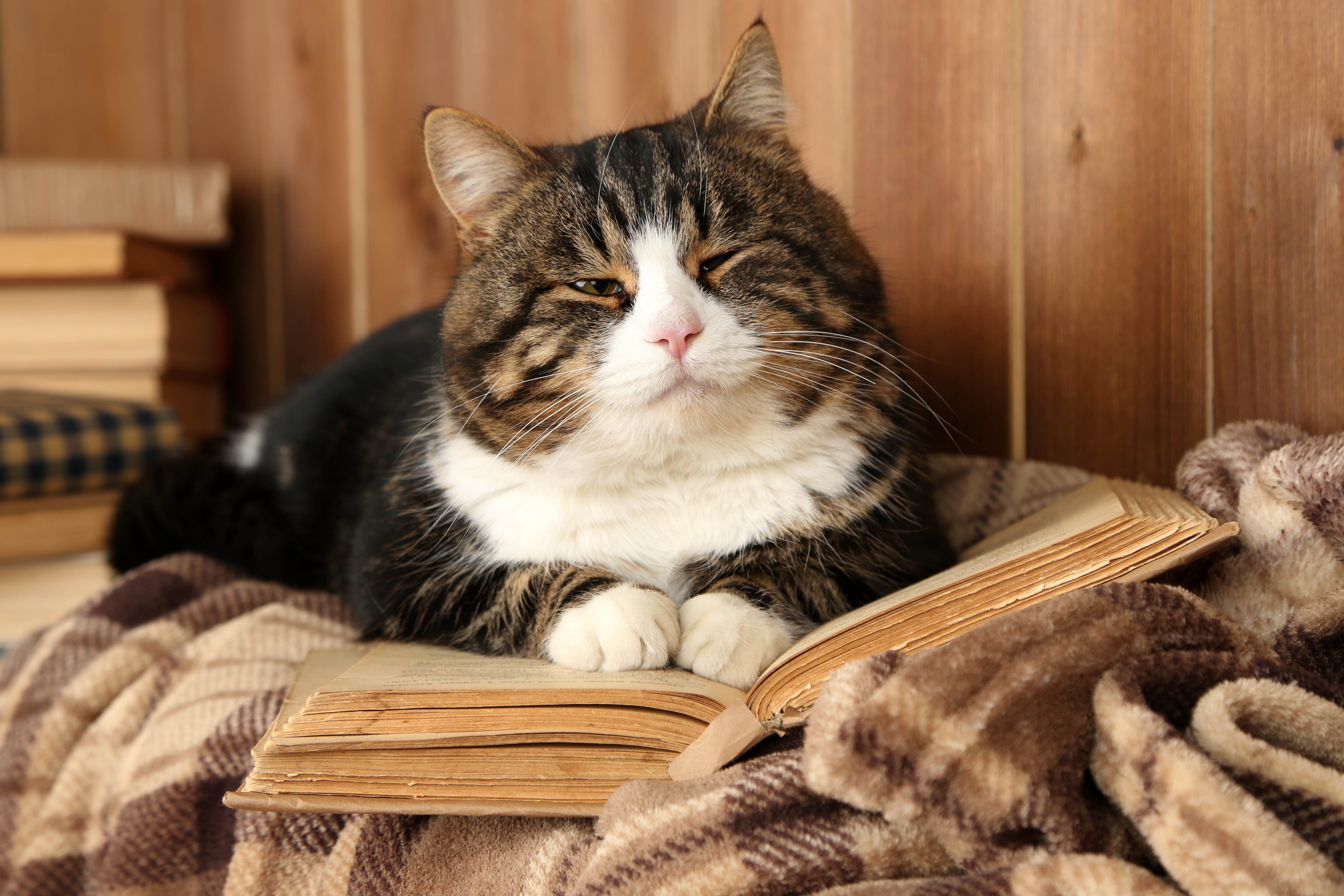 Do You Know Any Good Cat Books?