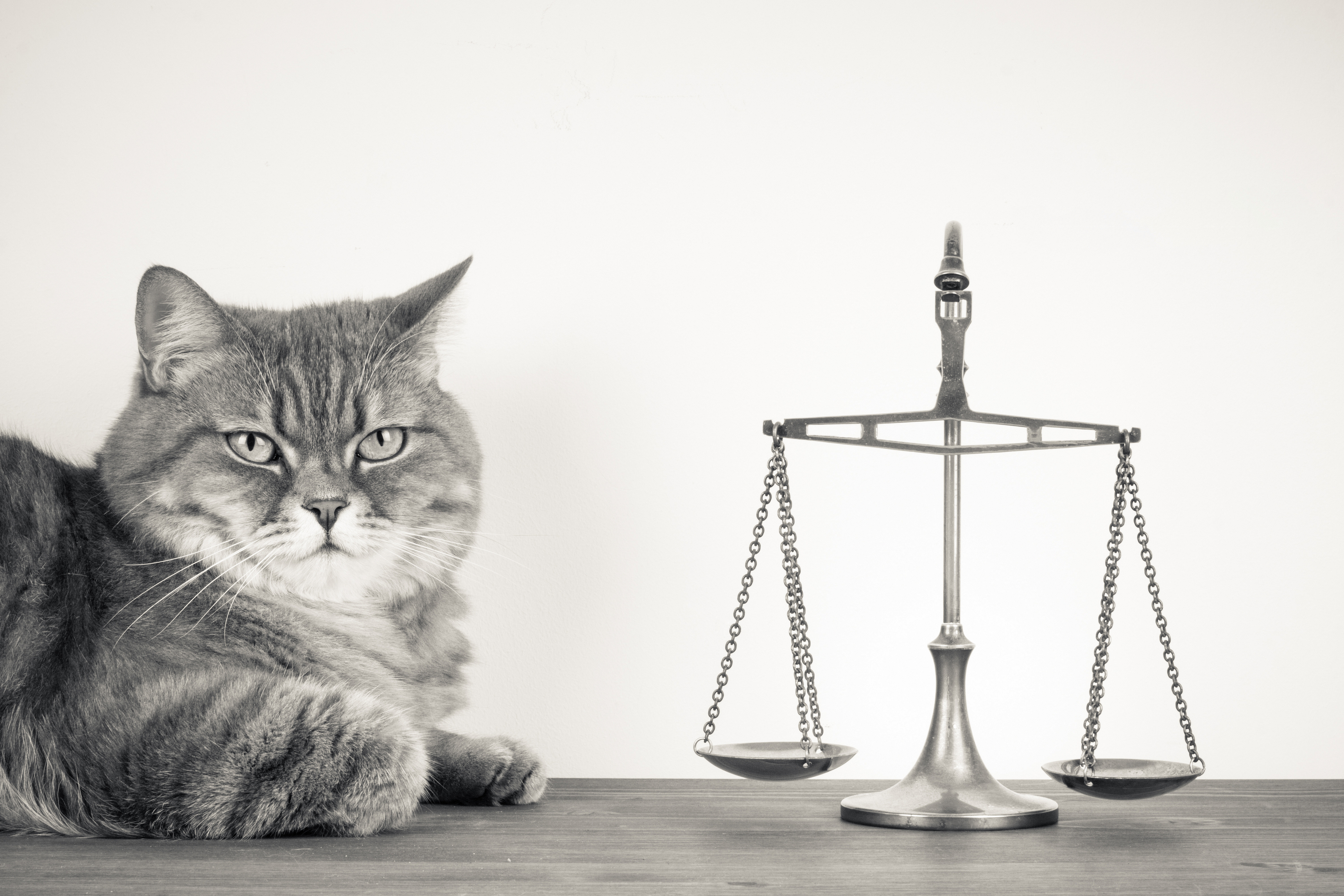 Feline Legal Issues In The DMV