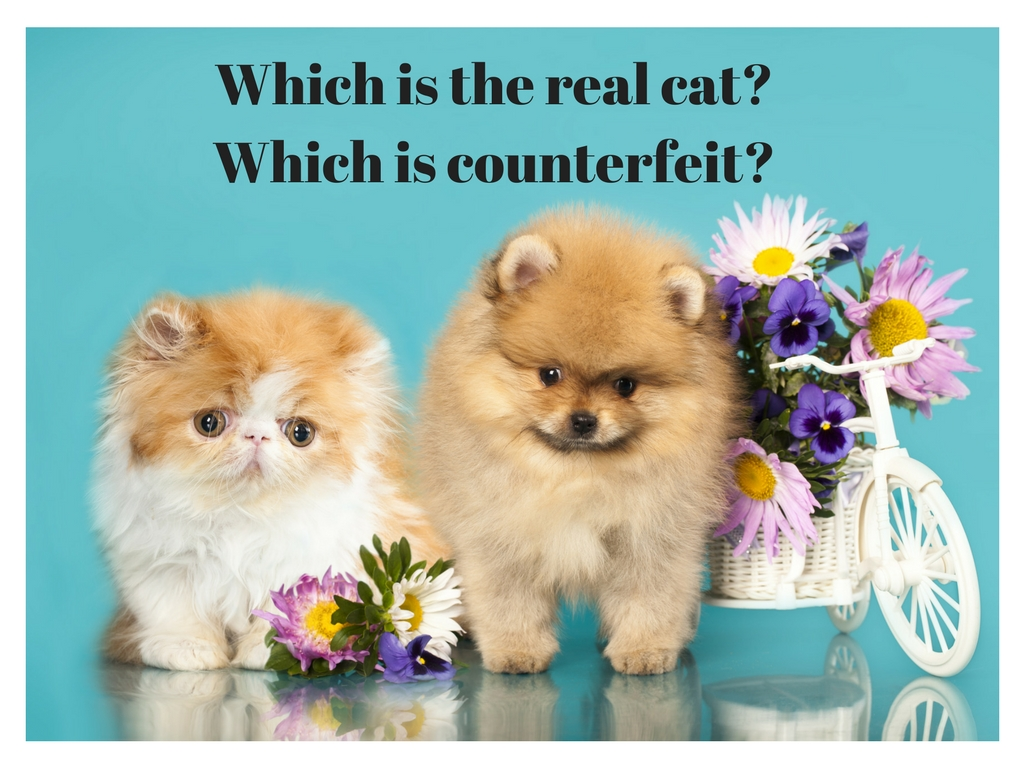 Are There Counterfeit Cat Drugs?