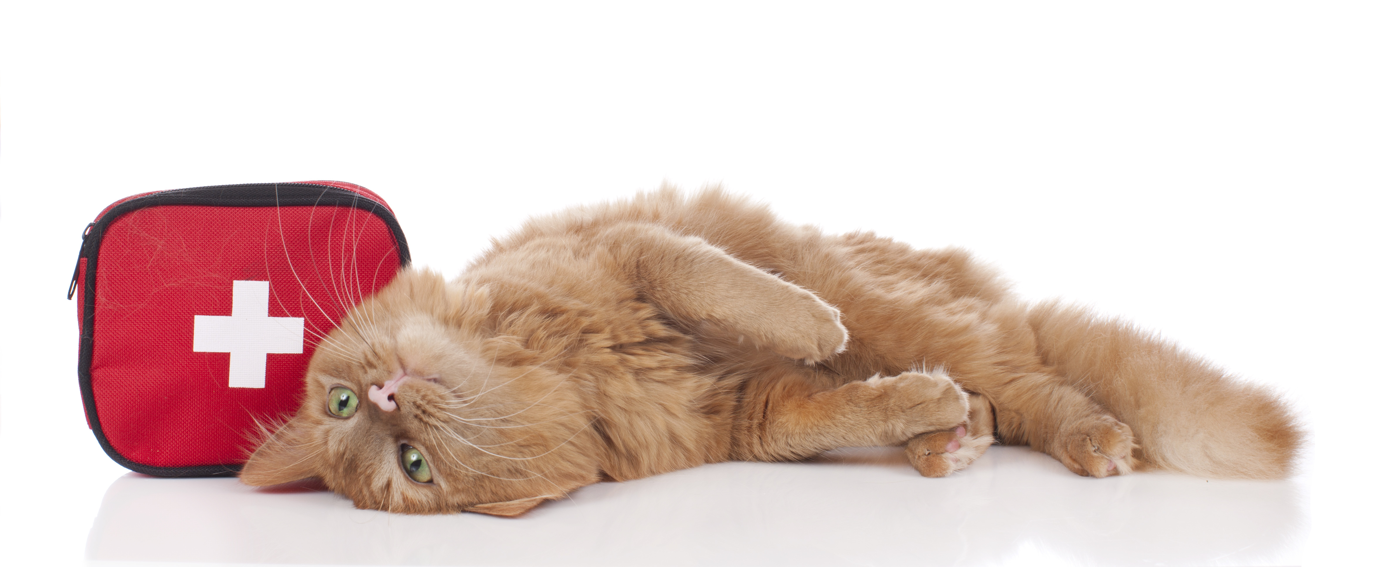 How Do You Prepare For A Cat Emergency When You Are Away?