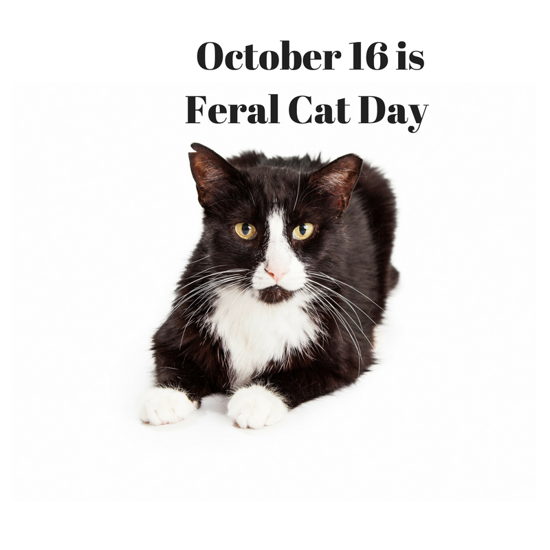 What Is Feral Cat Day?