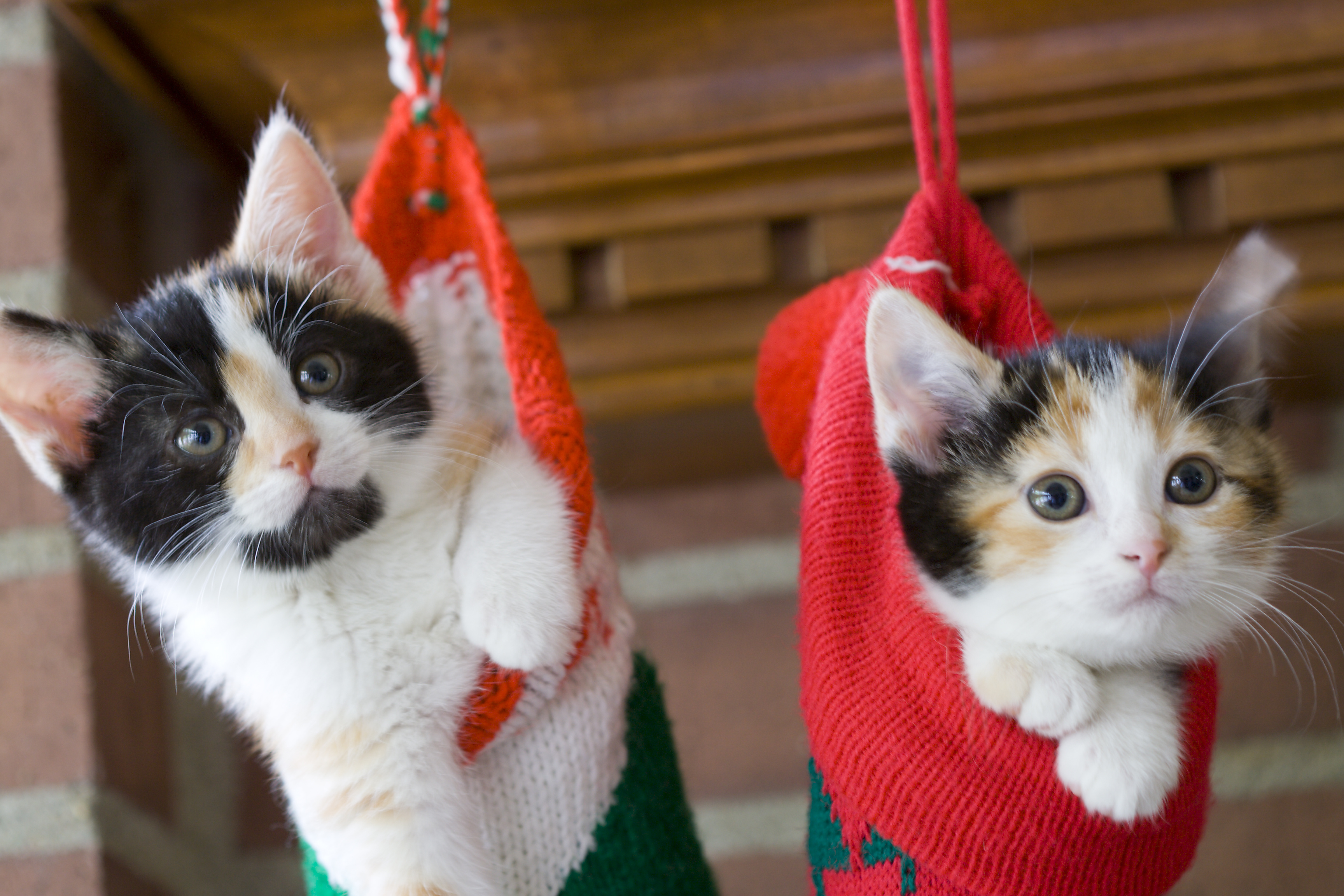 How To Keep Your Cat Safe During The Holidays
