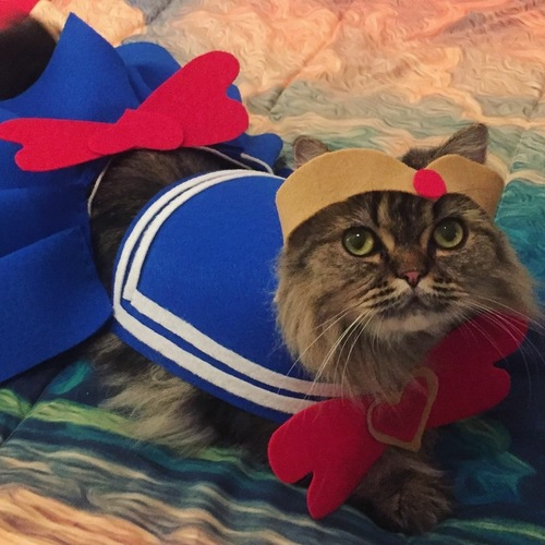 Costumed Cat Contest Winner 2018 and Client Survey