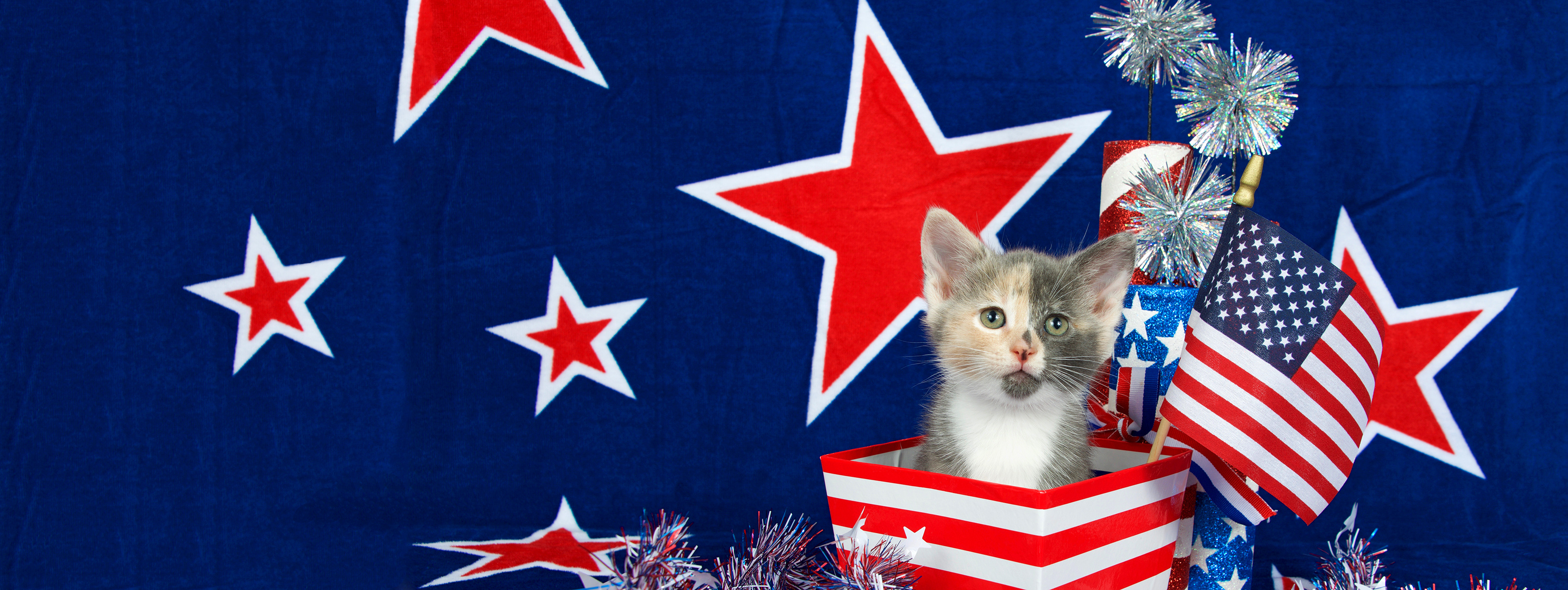 Helping Your Cat Survive the 4th of July