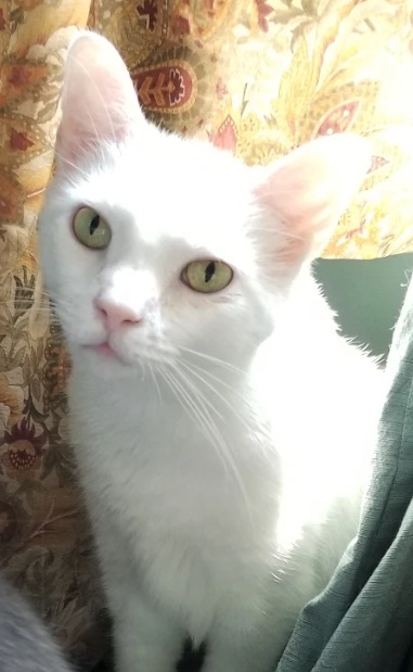 What Can I Do About My Cats Snuffles?